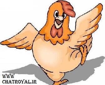 مرغ چت روم عسل